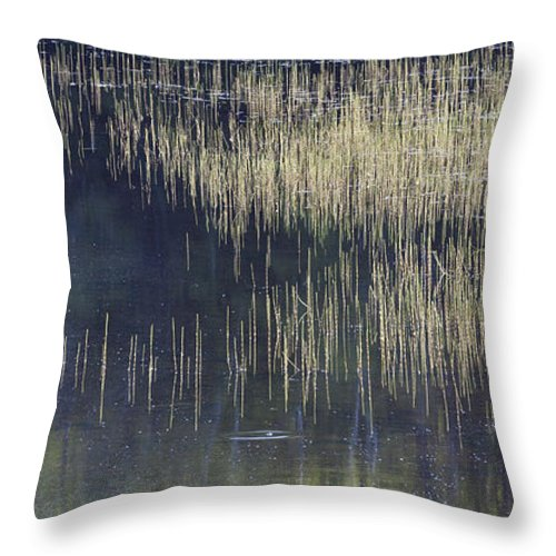 Pond Throw Pillow featuring the photograph Pond Reflections by Alan L Graham