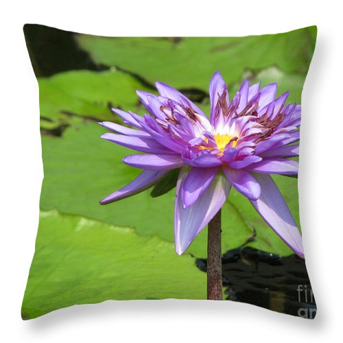 Lotus Throw Pillow featuring the photograph Pond Series by Amanda Barcon