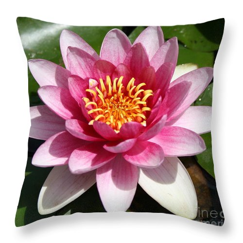 Waterlily Throw Pillow featuring the photograph Ponds Pride by Christiane Schulze Art And Photography
