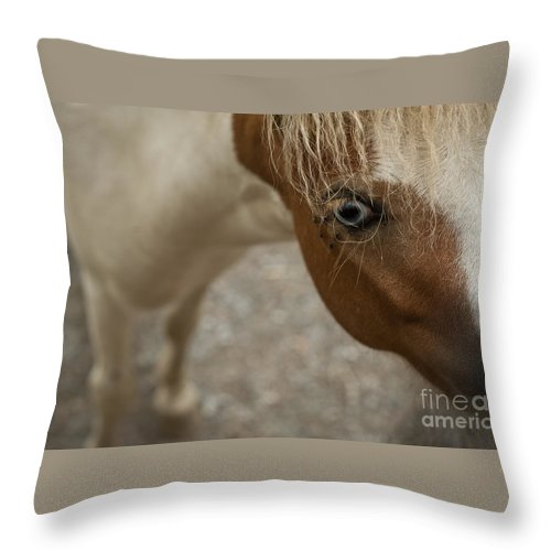 Photography Throw Pillow featuring the photograph Pony by Audrey Wilkie