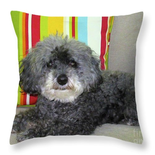 Tags Throw Pillow featuring the photograph Poodle Love by Lynn R Morris
