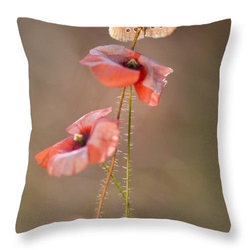 Flower Throw Pillow featuring the photograph Poppies by Jaroslaw Blaminsky