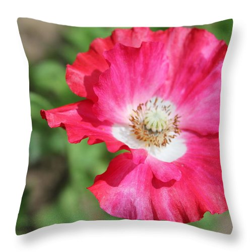 Flower Throw Pillow featuring the photograph Poppy by Chloe Shackelton