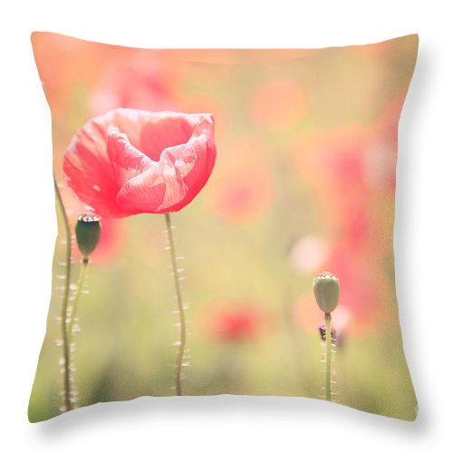Vintage Throw Pillow featuring the photograph Poppy Field In Tuscany - Italy by Matteo Colombo