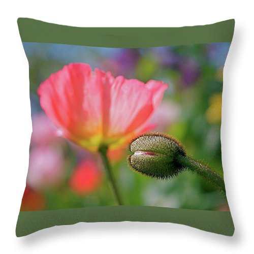 Poppies Throw Pillow featuring the photograph Poppy In Waiting by Rona Black