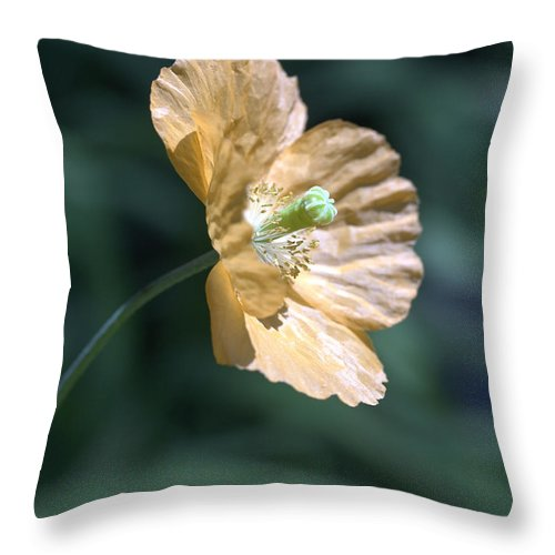 Poppy Orange Throw Pillow featuring the photograph Poppy by Tony Cordoza