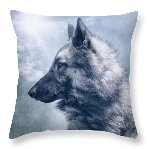 Belgian Tervuren Throw Pillow featuring the photograph Portrait Of A Belgian Tervuren by Wolf Shadow Photography