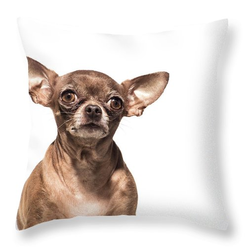 Pets Throw Pillow featuring the photograph Portrait Of A Chocolate Chihuahua - The by Amandafoundation.org
