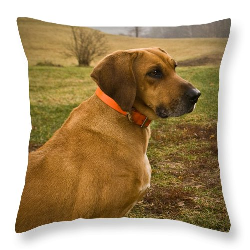 Dog Throw Pillow featuring the photograph Portrait Of A Dog by Douglas Barnett