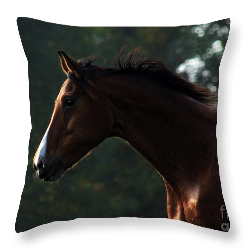 Horse Throw Pillow featuring the photograph Portrait Of A Horse by Angel Ciesniarska
