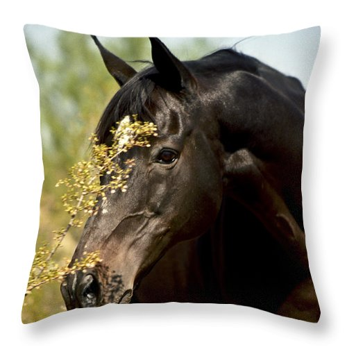 Horse Throw Pillow featuring the photograph Portrait Of A Thoroughbred by Kathy McClure