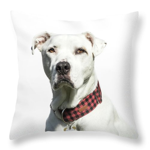Pets Throw Pillow featuring the photograph Portrait Of A White American Bulldog by Amandafoundation.org