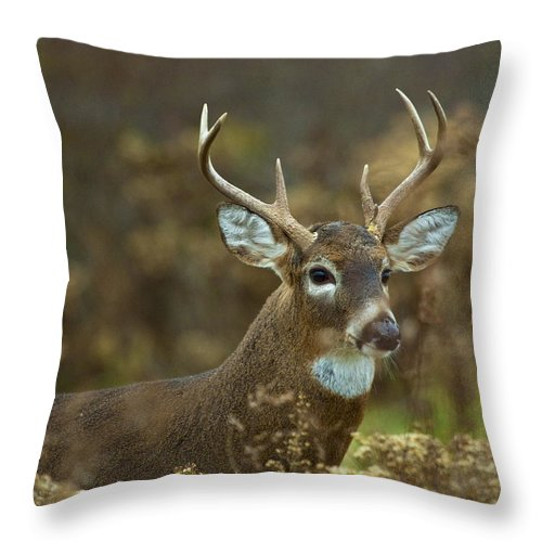 White Tailed Deer Throw Pillow featuring the photograph Portrait Of A White Tailed Buck by John Vose