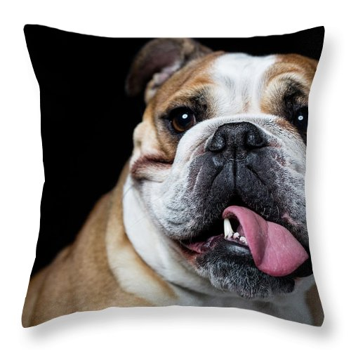 Pets Throw Pillow featuring the photograph Portrait Of An English Bulldog by Alvarez