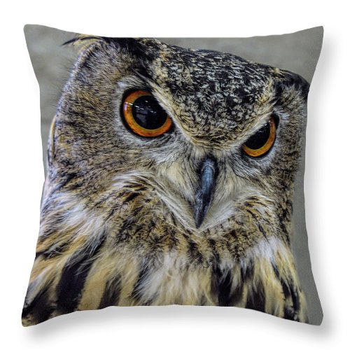 Great Horned Owl Throw Pillow featuring the photograph Portrait Of An Owl by Jennie Breeze