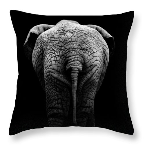 Elephant Throw Pillow featuring the photograph Portrait Of Elephant In Black And White II by Lukas Holas