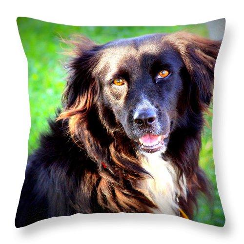 Portrait Of Man S Best Friend Throw Pillow For Sale By Aurelio Zucco