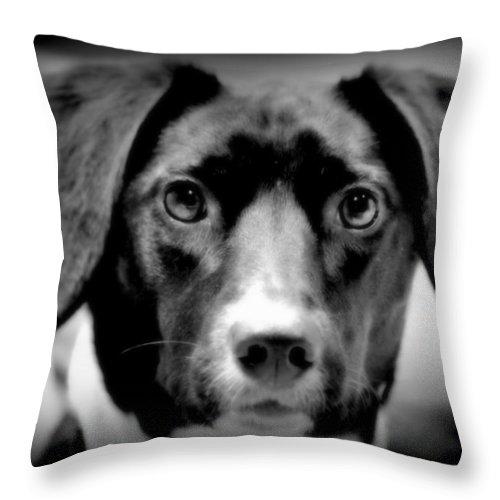 Dog Throw Pillow featuring the photograph Portrait Of Man's Best Friend II by Aurelio Zucco
