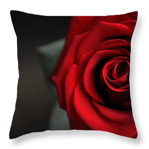 Rose Throw Pillow featuring the photograph Portrait Of Rose by Thomas Shockey