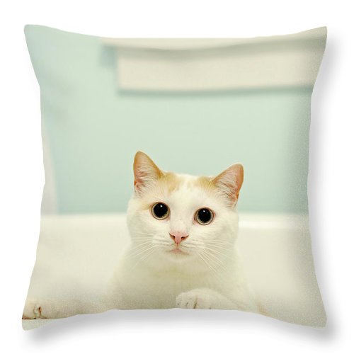 Pets Throw Pillow featuring the photograph Portrait Of White Cat by Melissa Ross