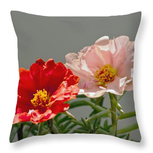 Portulaca Throw Pillow featuring the photograph Portulaca by Dennis Coates