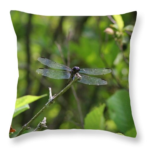 Dragonflies Throw Pillow featuring the photograph Posing Dragonfly by Karen Silvestri
