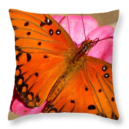 Butterfly Throw Pillow featuring the photograph Posing For Photos by Karen Beasley