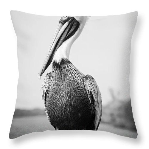 Pelican Throw Pillow featuring the photograph Posing Pelican - Black And White by Carol Groenen