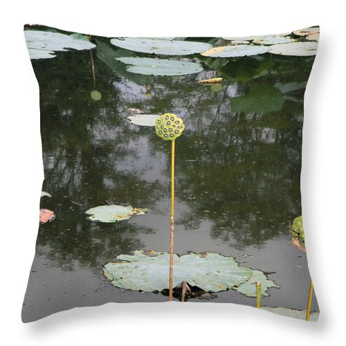 Lotus Throw Pillow featuring the photograph Post Bloom by Amanda Barcon