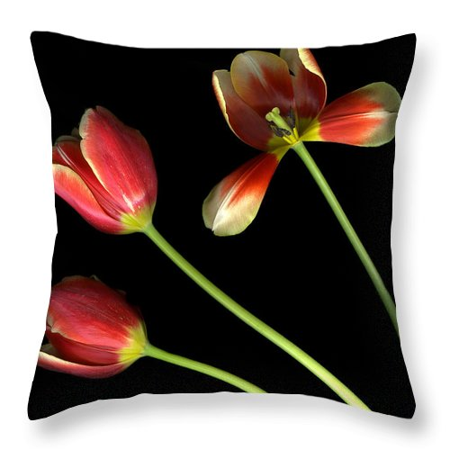 Scanography Throw Pillow featuring the photograph Pot Of Tulips by Christian Slanec