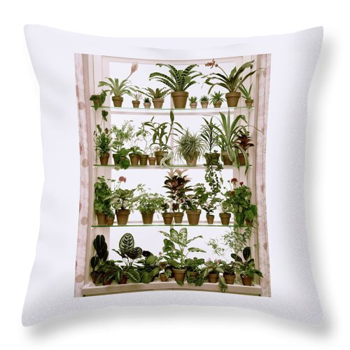 Plants Throw Pillow featuring the photograph Potted Plants On Shelves by Wiliam Grigsby