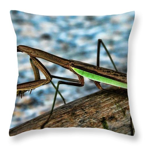Bug Throw Pillow featuring the photograph Praying Mantis by Jes Fritze