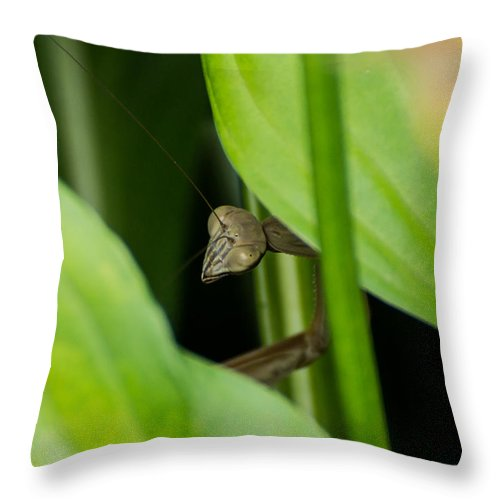 Praying Mantis Throw Pillow featuring the photograph Praying Mantis Peekaboo by Photographic Arts And Design Studio