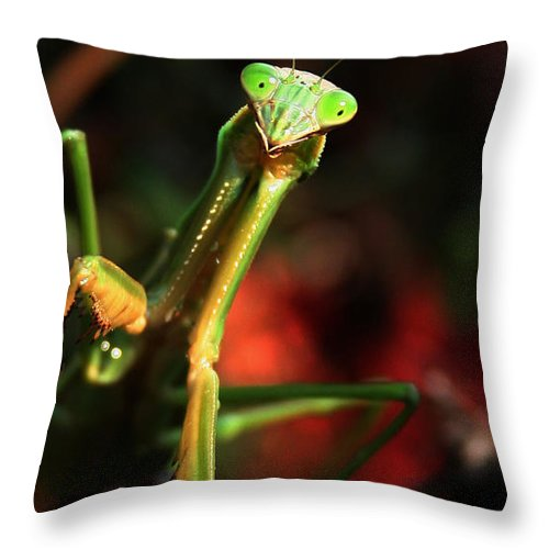 Praying Mantis Throw Pillow featuring the photograph Praying Mantis Portrait by Linda Sannuti