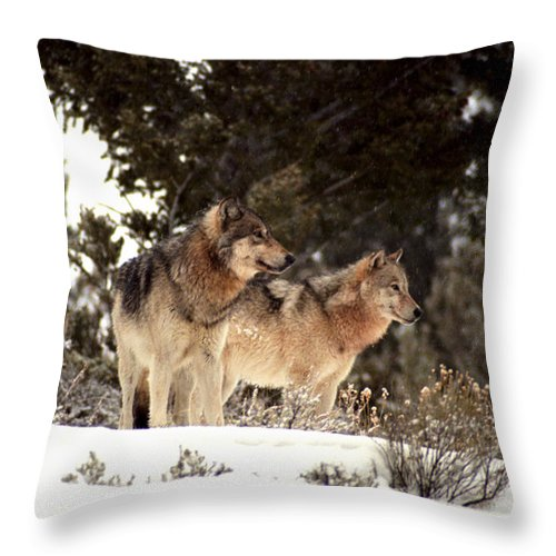 Wolves Throw Pillow featuring the photograph Predators by Sharon Elliott