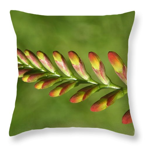 Flower Throw Pillow featuring the photograph Prehistoric Flower by Kenny Glotfelty