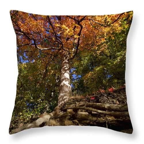 Fall Throw Pillow featuring the photograph Preserve Trails In Fall Six by Sara Schroeder