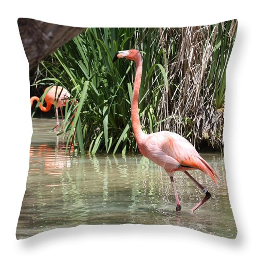 Pretty In Pink Throw Pillow featuring the photograph Pretty In Pink by John Telfer