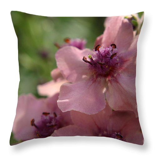 Pink Throw Pillow featuring the photograph Pretty In Pink by Kenny Glotfelty