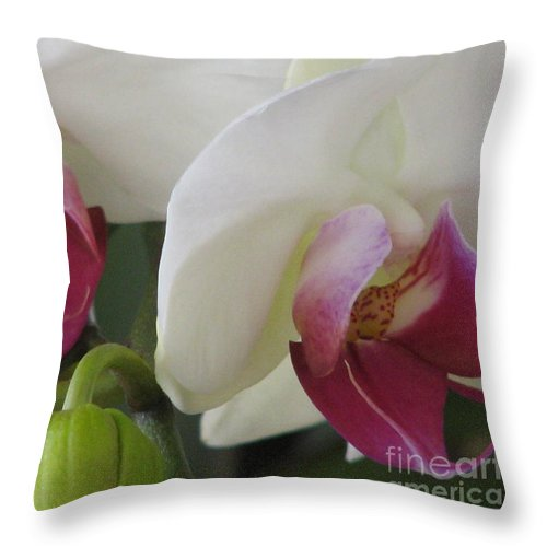 Orchids Throw Pillow featuring the photograph Pretty In Pink by Patricia Blake