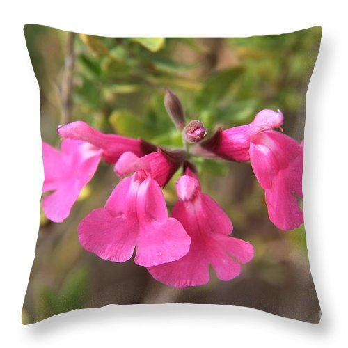 Salvia Flowers Throw Pillow featuring the photograph Pretty In Pink by Suzanne Oesterling