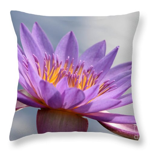 Landscape Throw Pillow featuring the photograph Pretty In Purple by Sabrina L Ryan