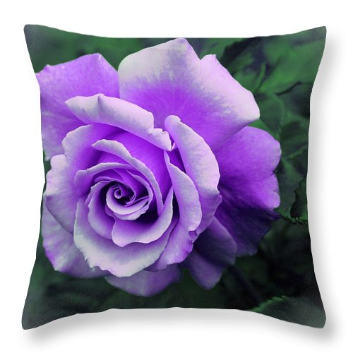 Pretty Lilac Rose Throw Pillow featuring the photograph Pretty Lilac Rose by Barbara Griffin