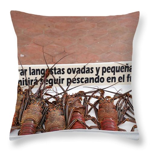 Spiny Lobsters Throw Pillow featuring the photograph Pretty Lobsters by Allan Morrison