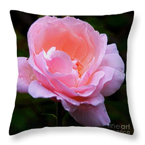 #pink Throw Pillow featuring the photograph Pretty Pink Rose by Kathleen Struckle