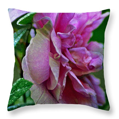 Rose Throw Pillow featuring the photograph Pretty Pink Rose by Mary Anne Williams