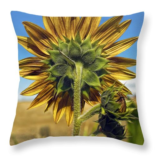 Autumn Throw Pillow featuring the photograph Pretty Rear View by Peggy Hughes
