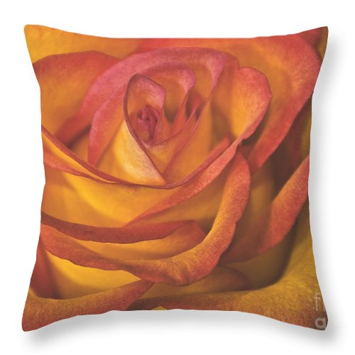Rose Throw Pillow featuring the photograph Pretty Rose by Timothy Flanigan and Debbie Flanigan Nature Exposure