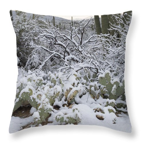 Nature Throw Pillow featuring the photograph Prickly Pear And Saguaro Cacti by John Shaw