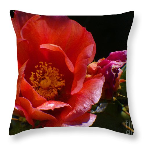 Desert Flower Throw Pillow featuring the photograph Prickly Pear Flower by Afroditi Katsikis
